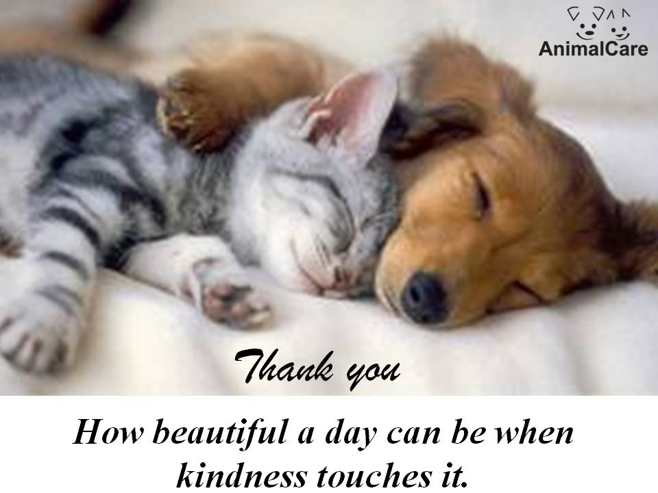 "Tis time to say ""thank you"" again (November donors) « AnimalCare"