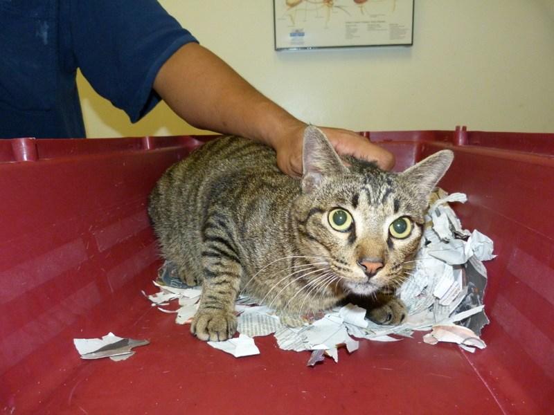 Male cat hormones after neutering
