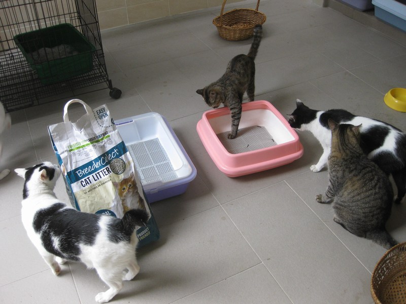 best rated cat litter for multiple cats