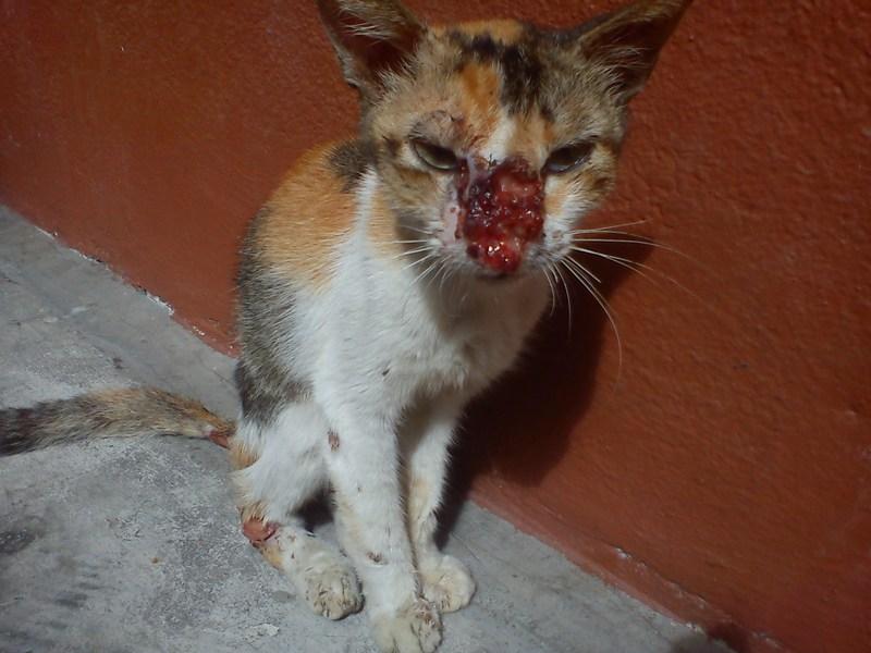 Another sick cat in ne... Demented Animals
