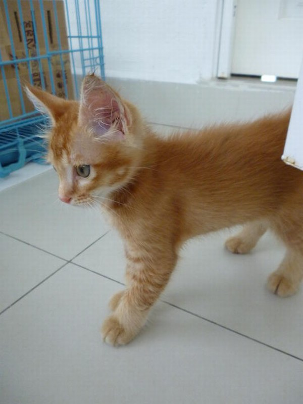 how to adopt stray cat