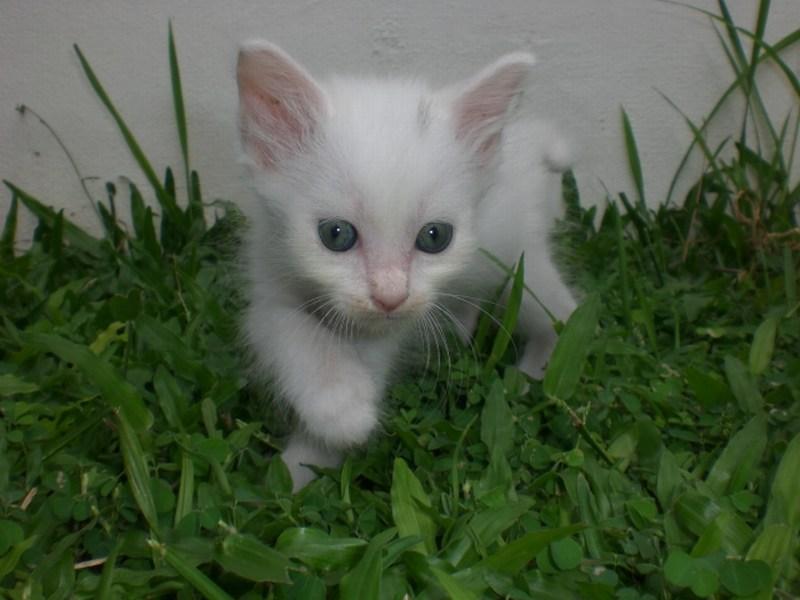 mini-Chezzy