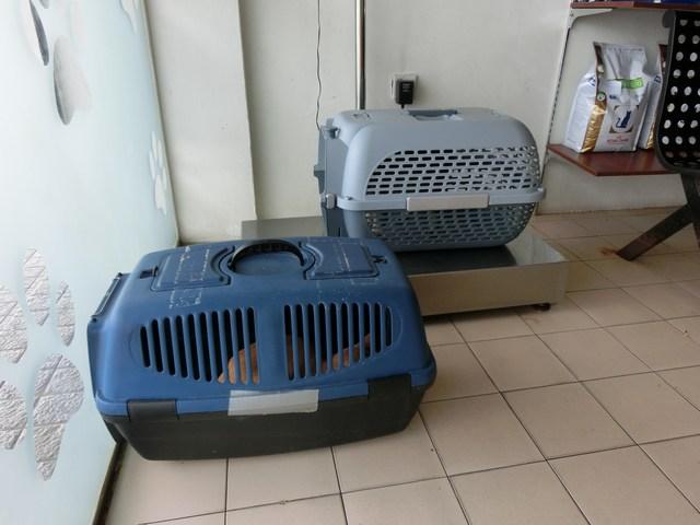 mini-CIMG7831