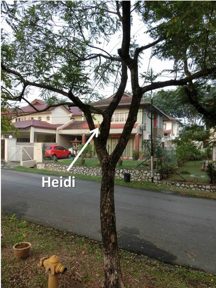 where is heidi