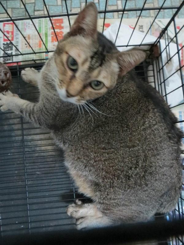 mini-Fat girl