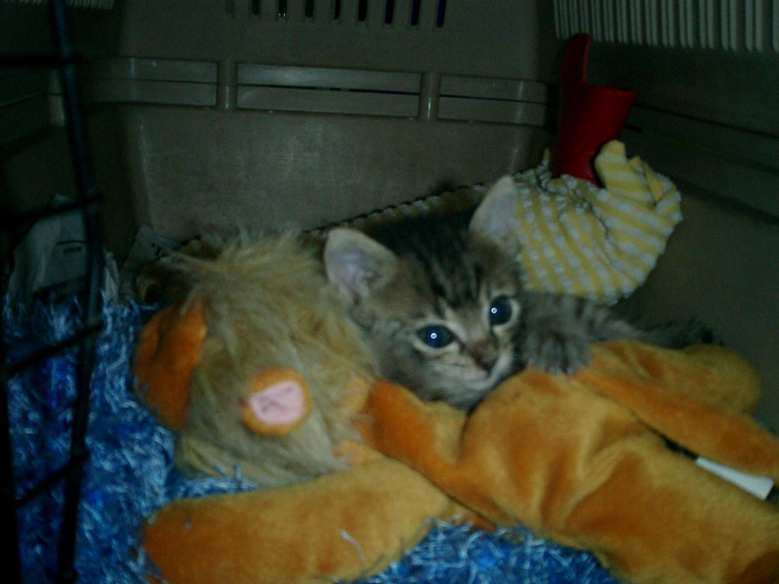 Tiger&Lion