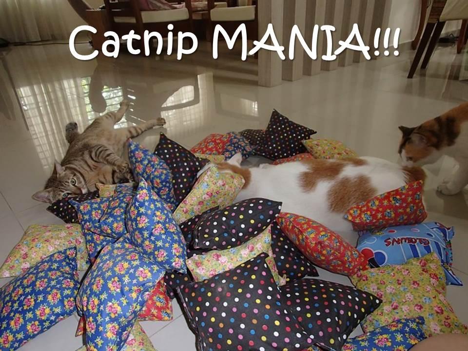 Catnip MANIA!!!