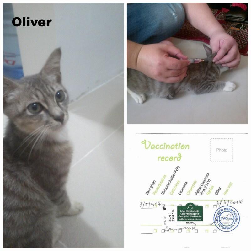 mini-PicMonkey Collage Oliver