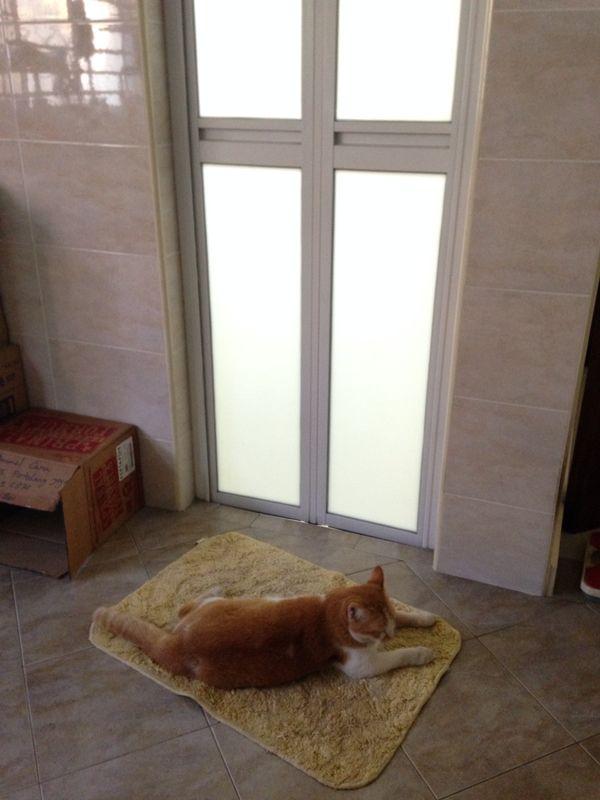 Ginger outside bathroom