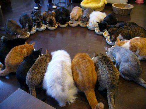 cat family eating dinner