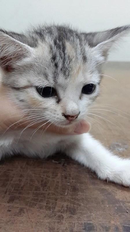 mini-miao 5