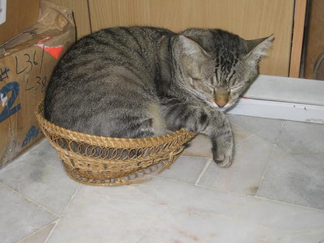 tiger's basket