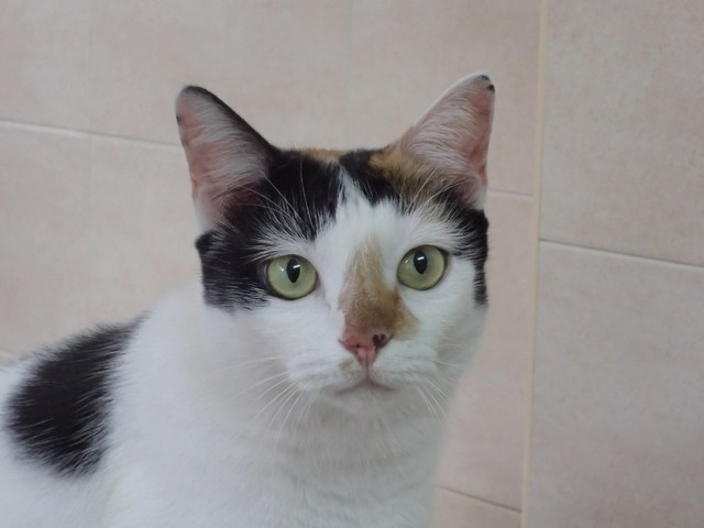 mini-Cleo