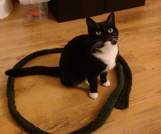 cat trap 2