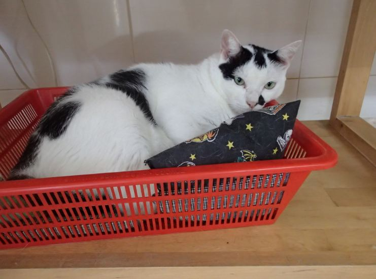 cow in basket