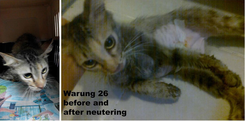 norely warung 26 14 dec