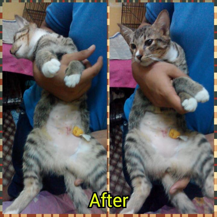After-Luna