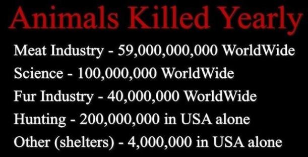 animal killed yearly