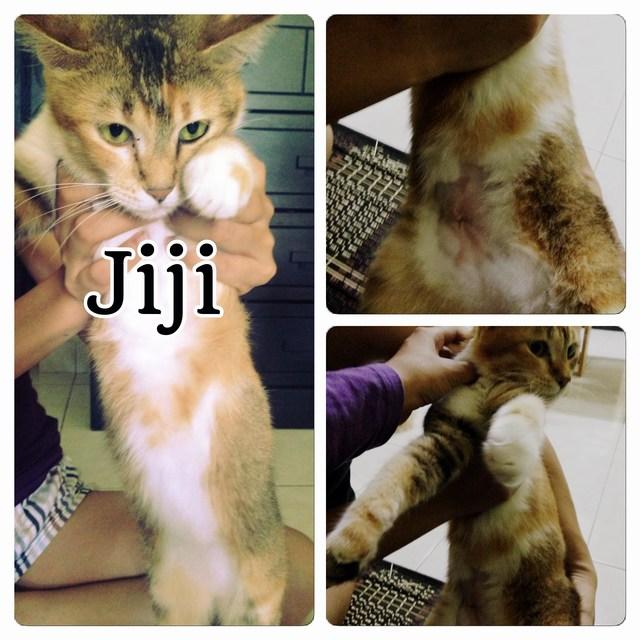 mini-Jiji