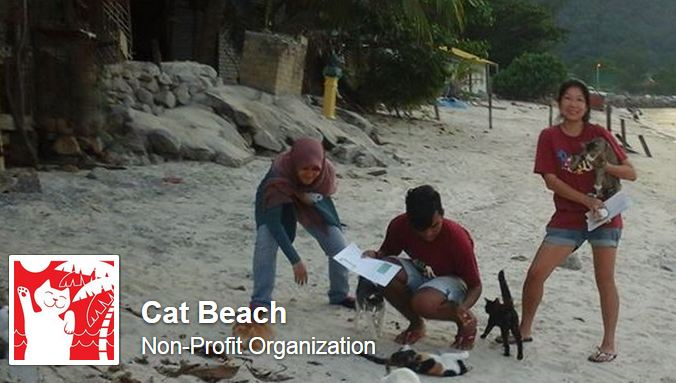 cat beach