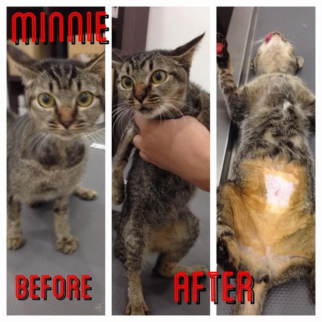 motion activated cat deterrent indoor