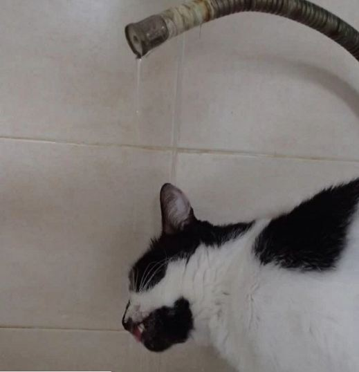 indy drinking from the tap