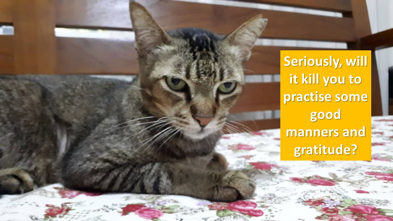 Another Blessing In Disguise! « AnimalCare