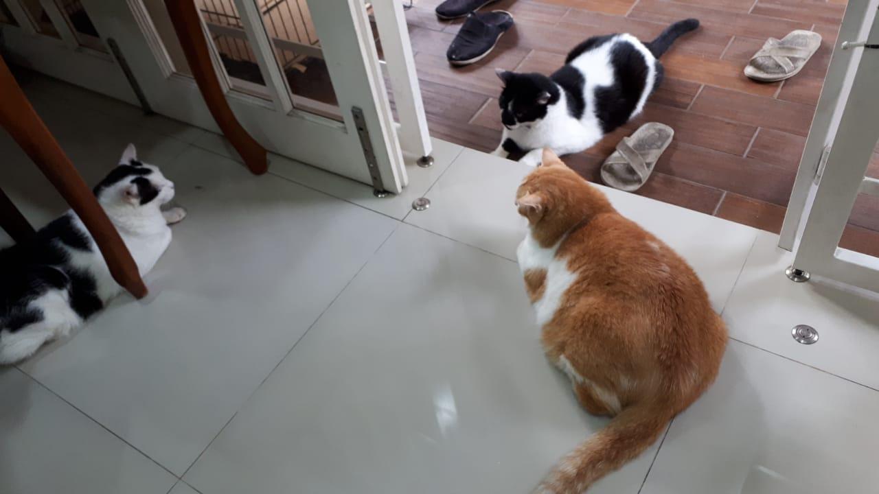 Stray animals in Malaysia